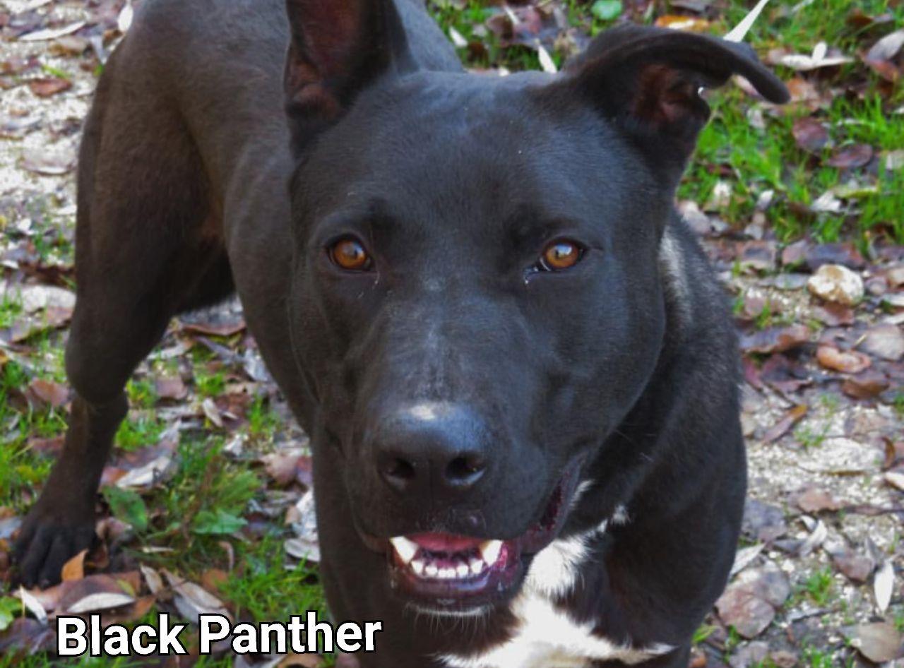 Black Panther cerca casa: appello per adozione