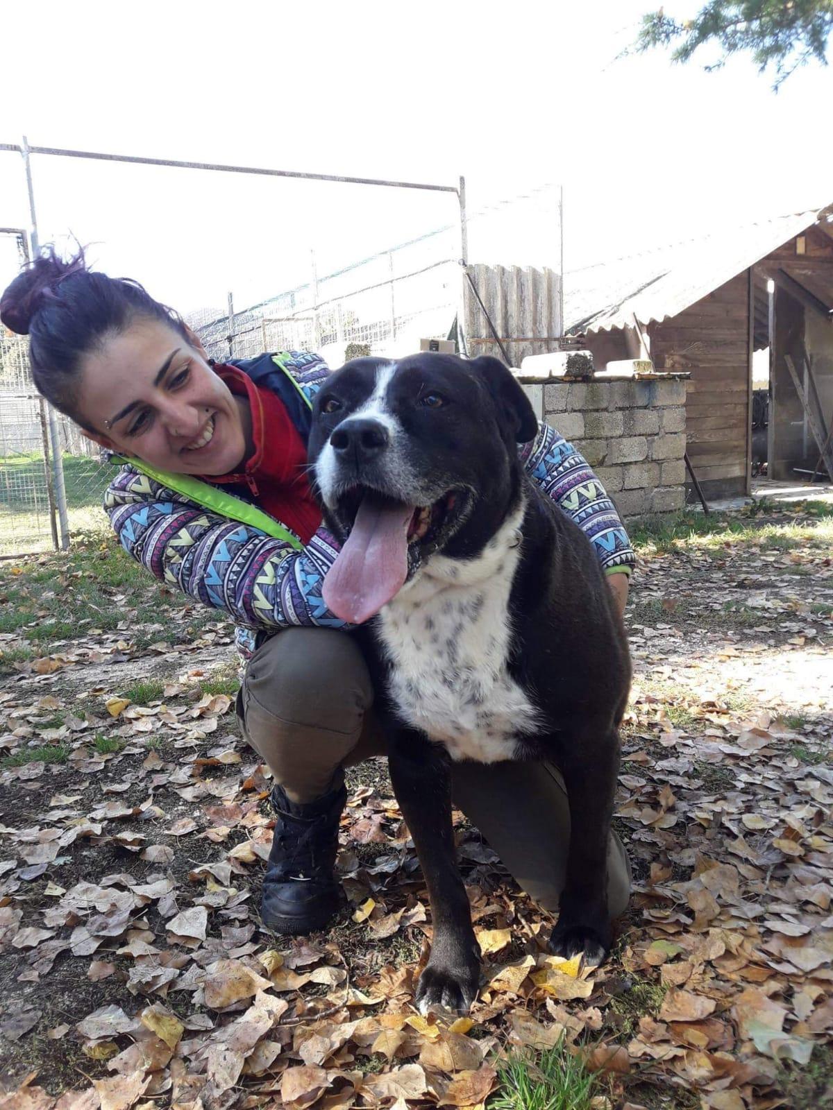 Hera cerca casa: appello per adozione