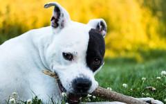 Mordedura de perro: ¿cómo lidiar con perros mordelones?