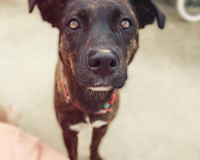 Alimento para perros con estómagos sensibles