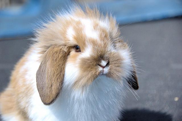 Insufficienza renale nel coniglio: cause, sintomi e terapia