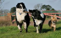 Regole di convivenza con più cani: quali sono?