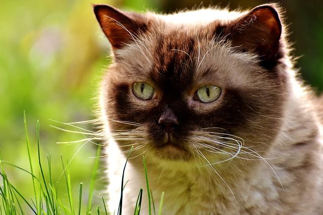 Alergias alimentarias en gatos: que no darle al minino de hogar