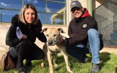 Cane anziano Thor trova famiglia dopo 11 anni in canile