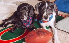 Cani anziani abbandonati dopo 10 anni trovano lieto fine