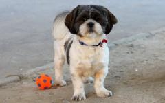 Enseñar al perro a reconocer su nombre: un buen plan canino
