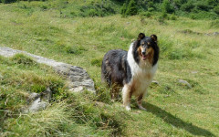 Enfermedad en perros: las cinco enfermedades más comunes