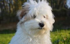 Dieta crudista del cane: cos'è e come applicarla