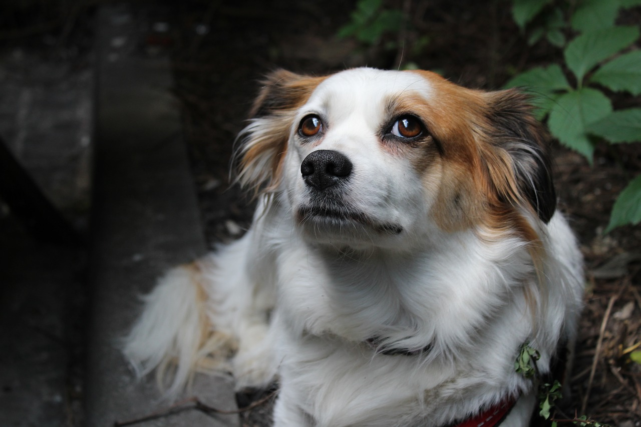 Odore forte nel cane