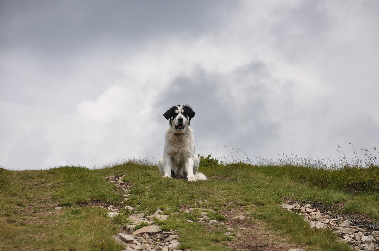 cane dominante