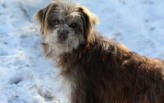 Perros y frío: errores a evitar y enfermedades asociadas