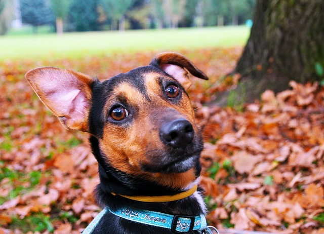 Collar anti corteza: opciones para el perro