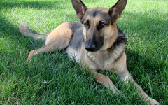 Cálculos renales en perros: síntomas y tratamiento