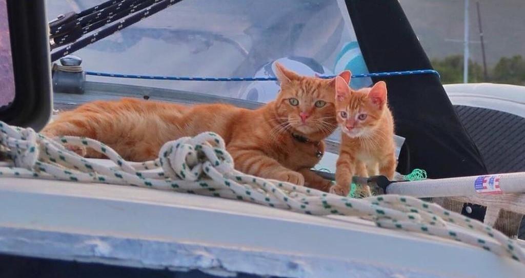 Gatto salvato da una coppia inizia nuova vita in barca