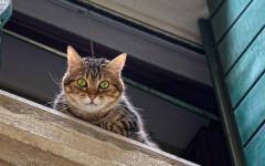 Gatto salva anziano e da l'allarme dopo il malore