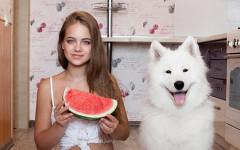 ¿ Pueden los perros comer sandía? Misterio canino