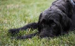 ¿Por qué mi perro orina por todos lados? Consejos