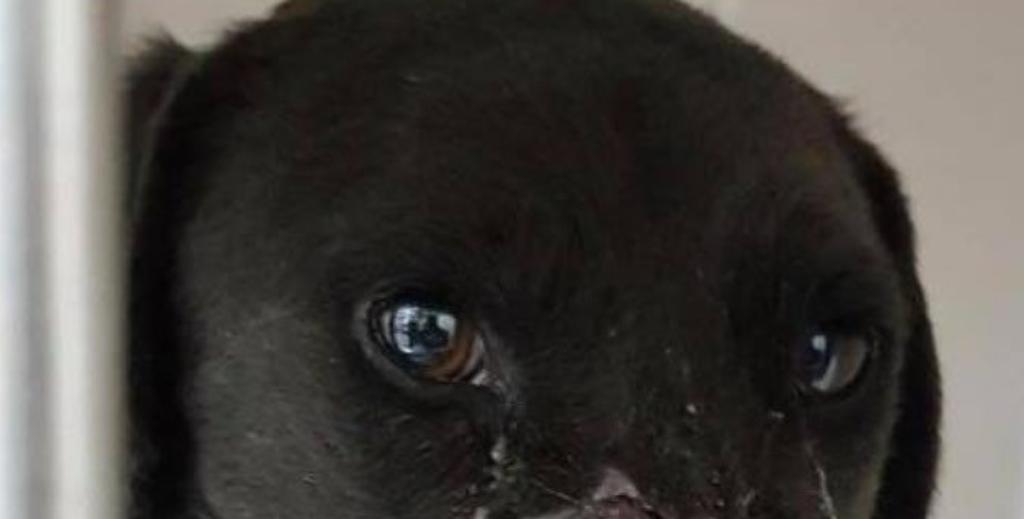 """Operato Peppino, il cane con il """"muso più bello del mondo"""""""