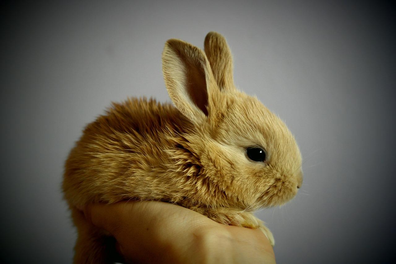 Errori conigli