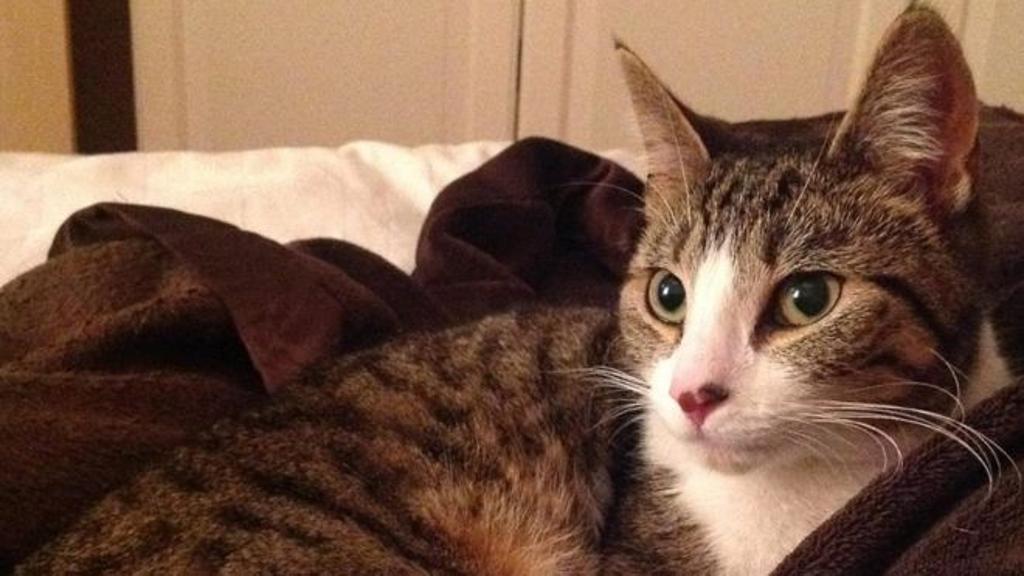 Gatto torna a casa dopo 5 anni, miracolo di Natale