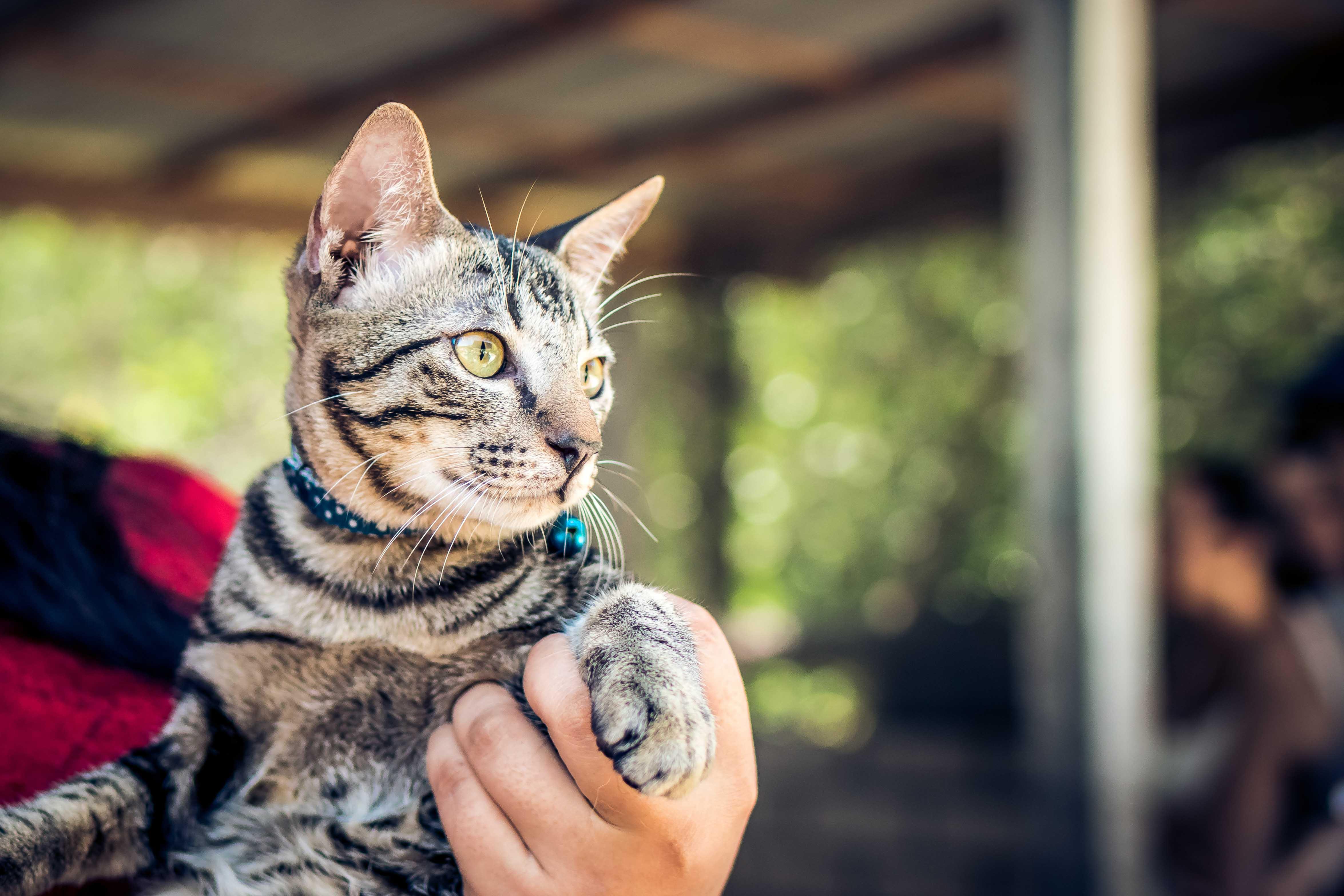 cascabeles para los gatos