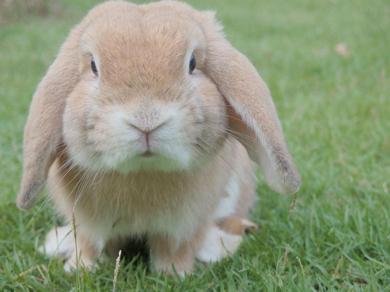 Coniglio infelice
