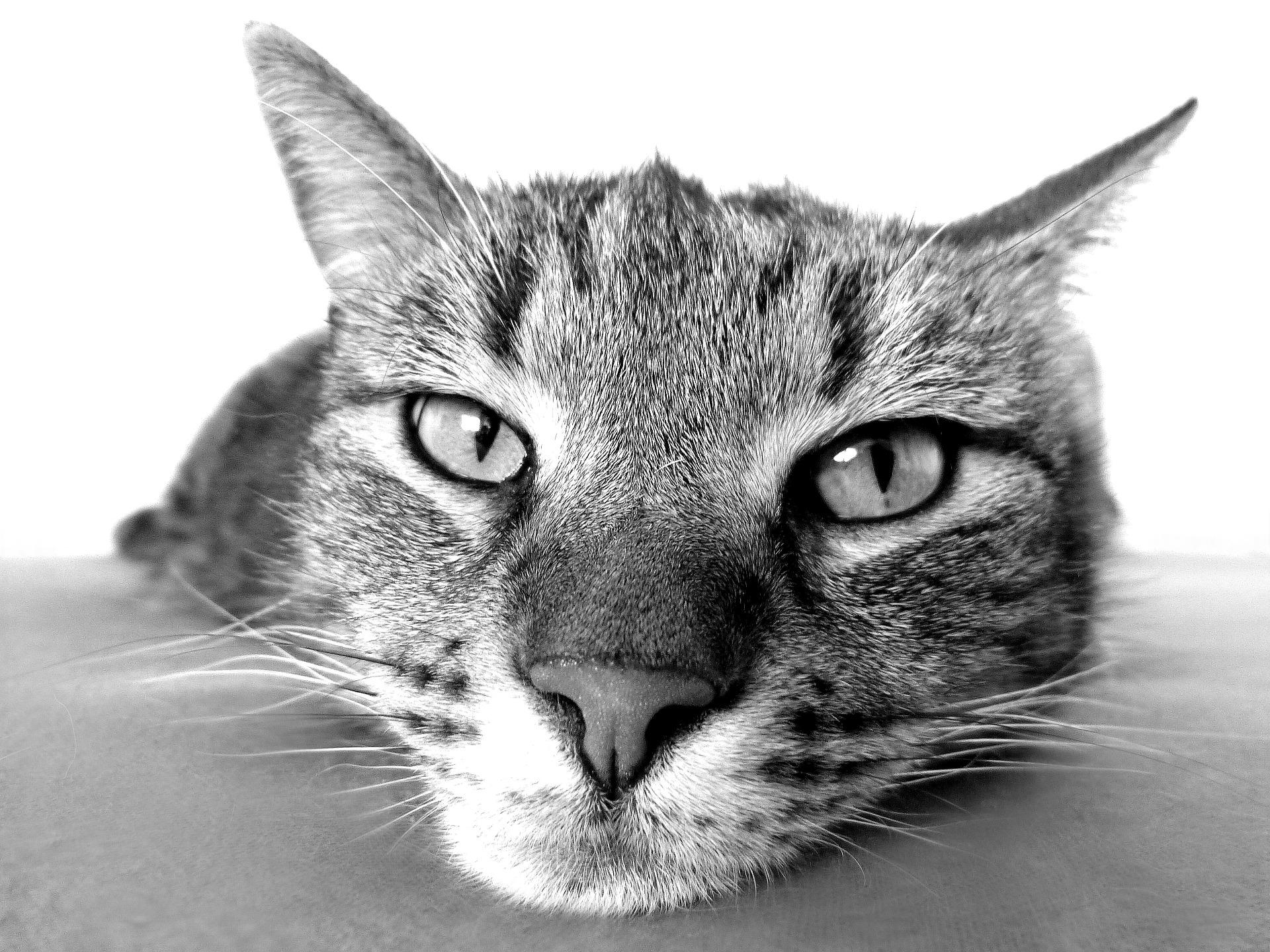 ¿Por qué mi gato me mira fijamente?