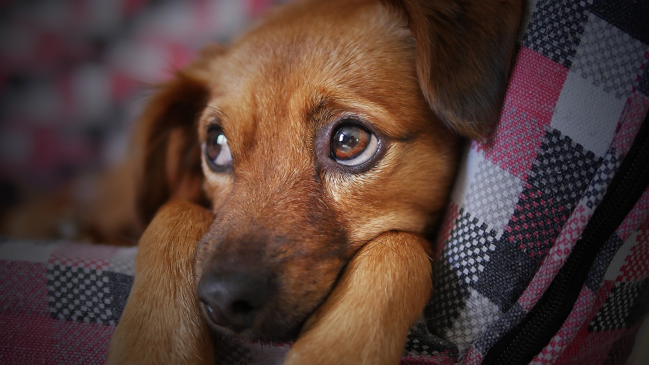 Cani peggiori cibi