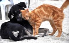 Amicizia cani e gatti