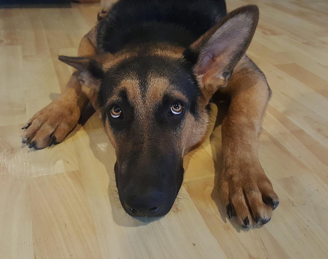 paura del temporale nel cane