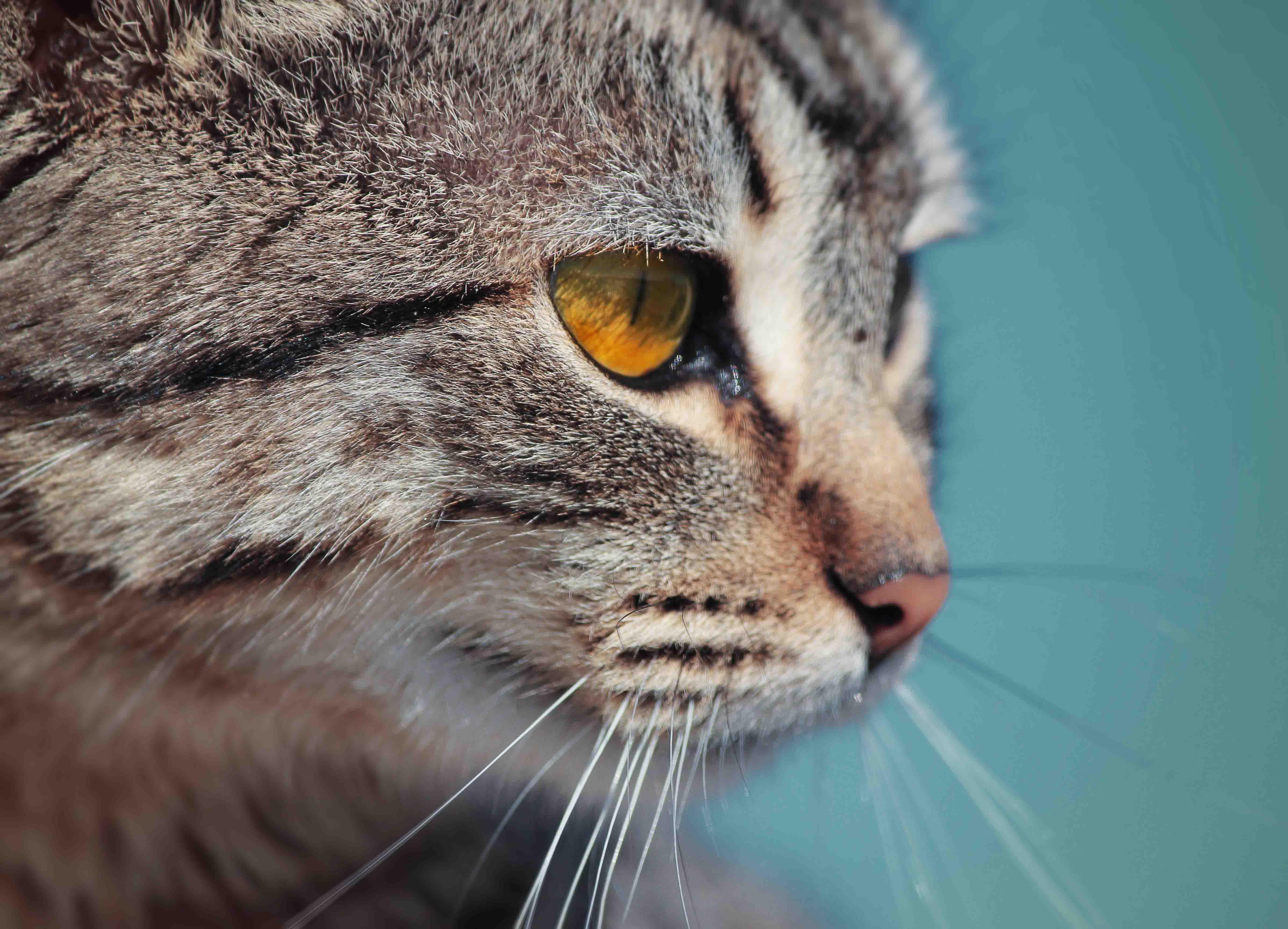 Los sentidos de los gatos