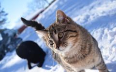 freddo per i gatti