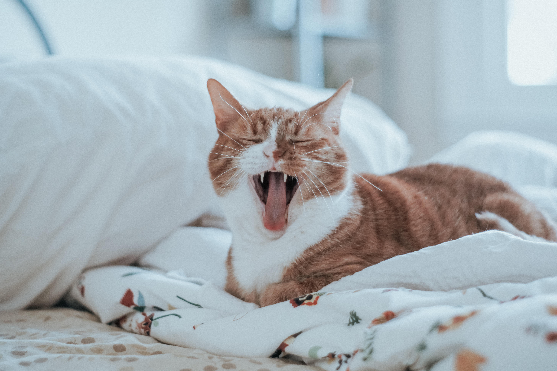 Anorexia del gato