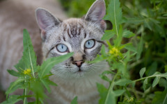 Colitis gatos