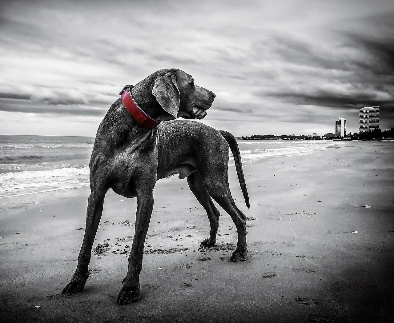Perro dominante: Cómo reconocerlo, entenderlo y amarlo