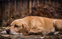 Caída pelo perro verano