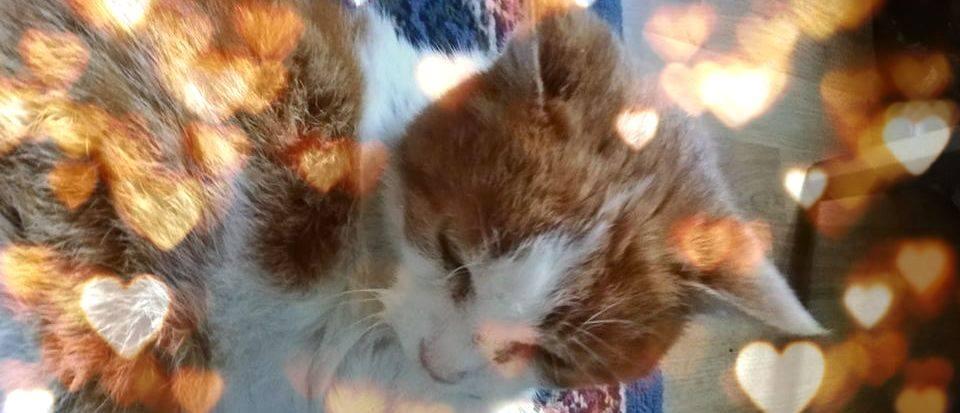 adozioni gatti