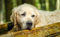 Zampa rotta cane guarigione