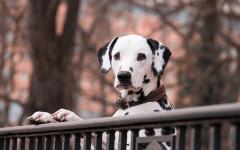 Cani viziati
