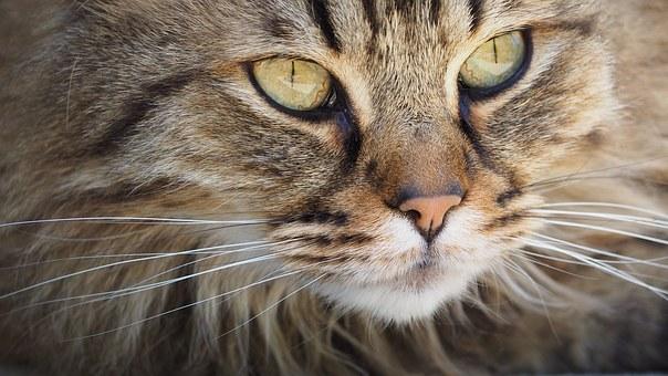 Gatti concorso bellezza