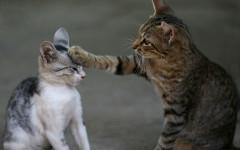 Giochi gatti gratis