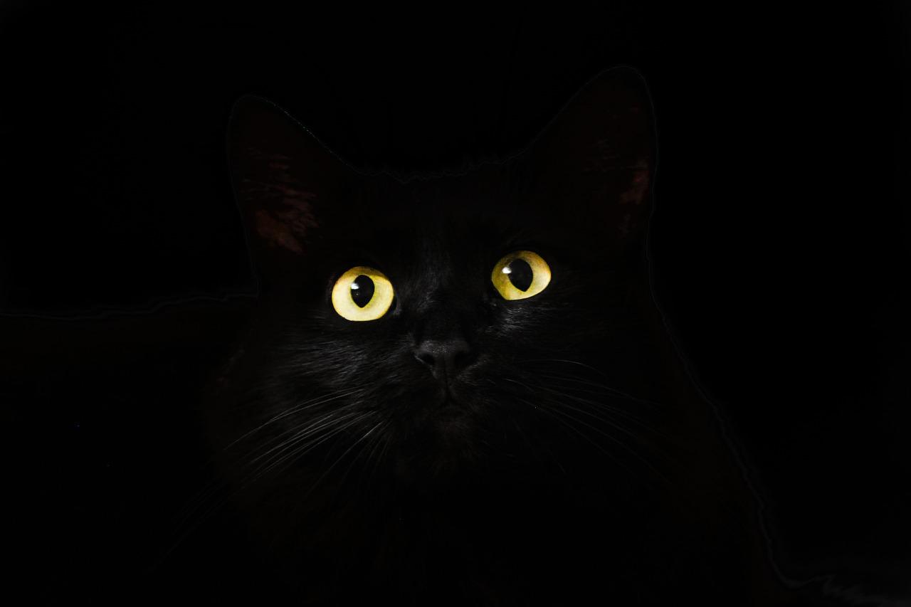 Sapone gatti