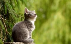 Schwarzschild's Cat