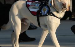 El perro de George Bush