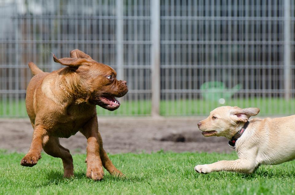 giochi gratis cani