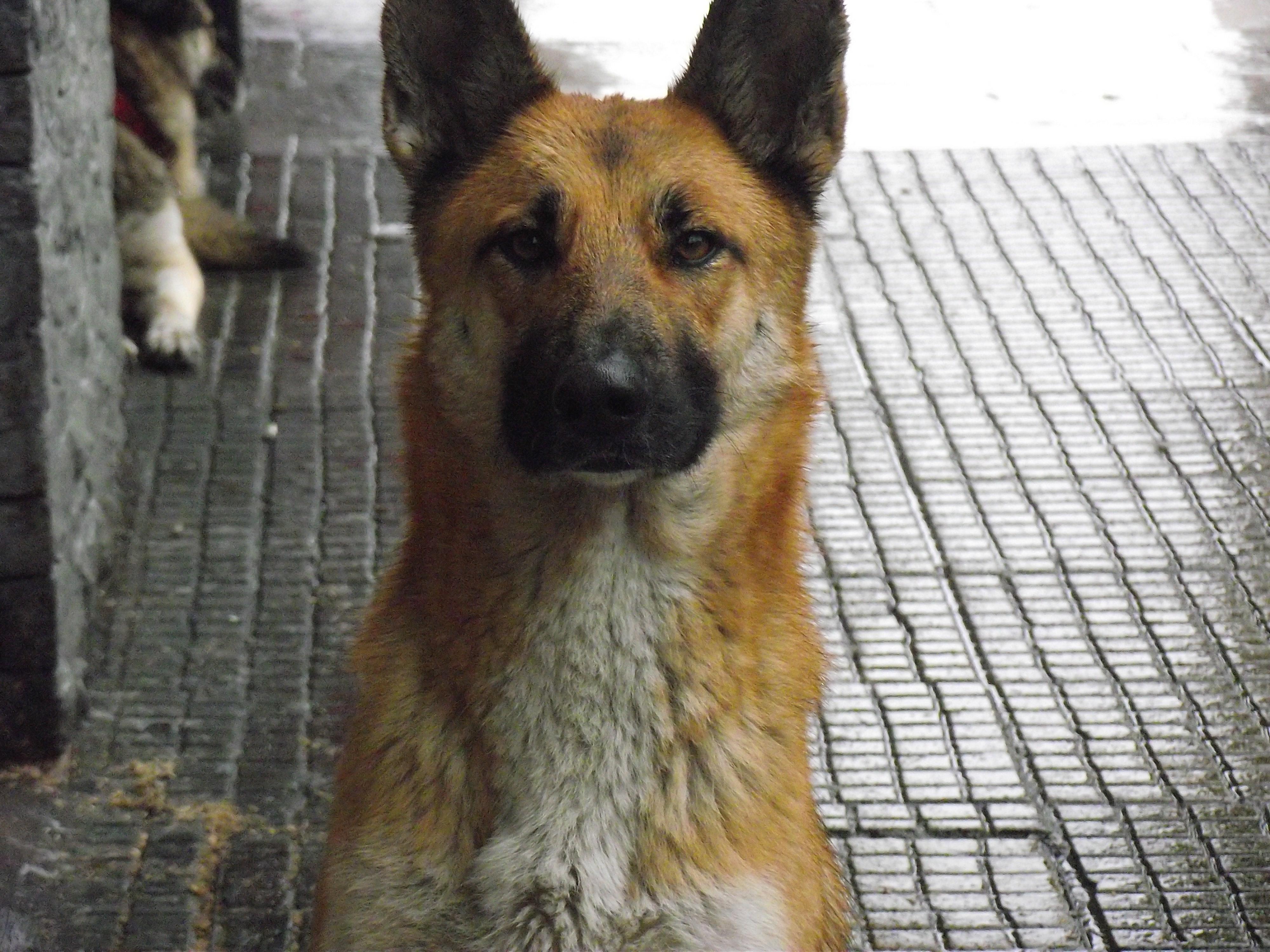 guardia urbana perro