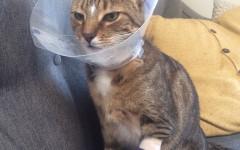 Operare gatto
