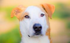 adozioni cani milano
