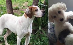adozioni-cani-calabria