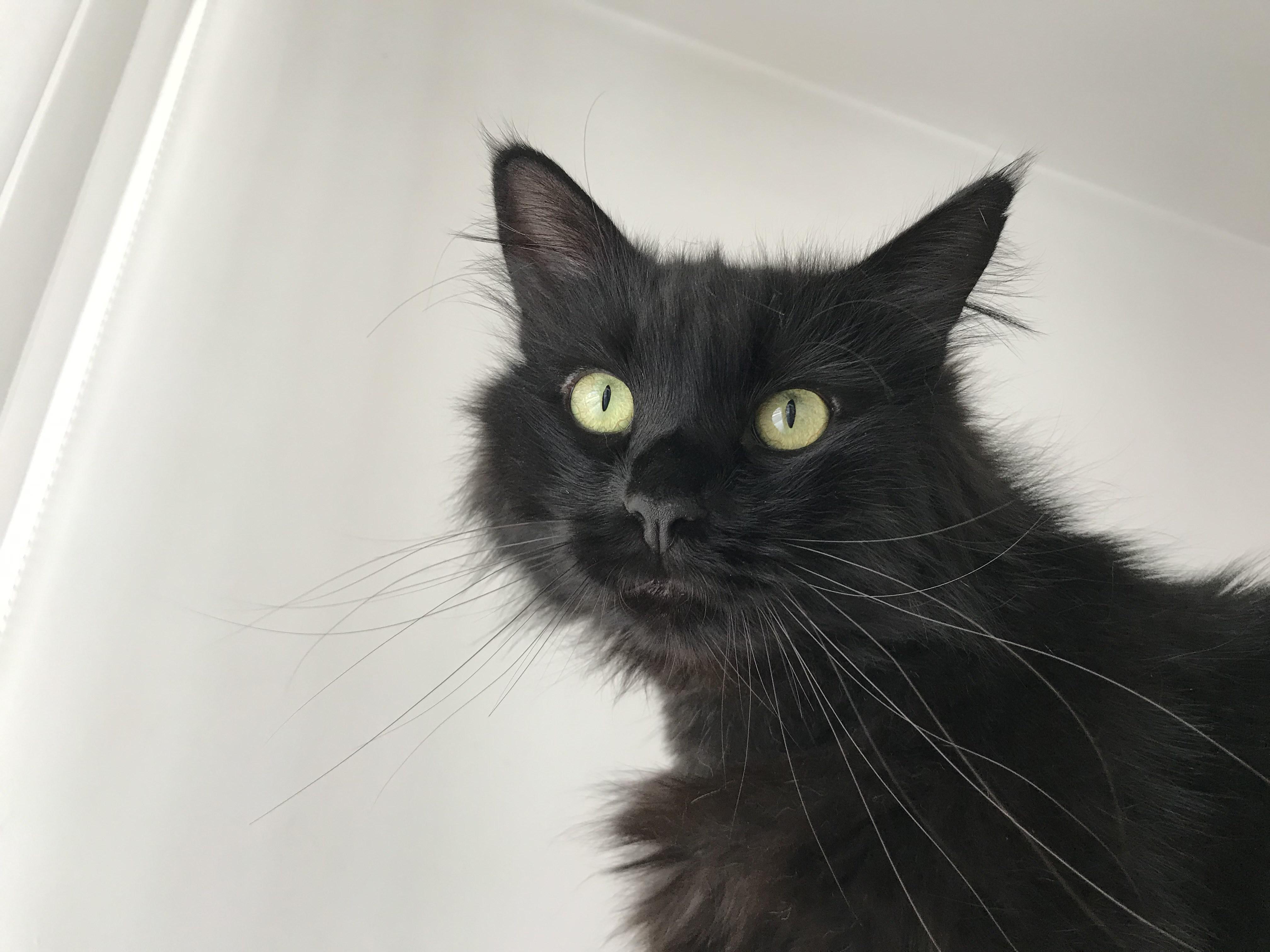adozioni gatti friuli